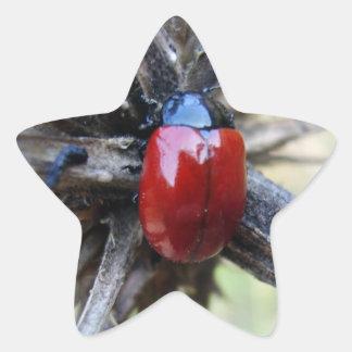 beetle pegatina en forma de estrella