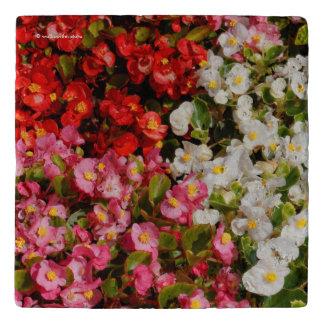 Begonias de cera coloridas salvamanteles