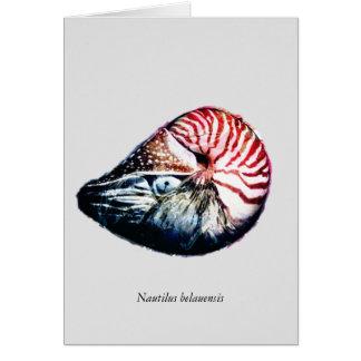 Belauensis del nautilus tarjeta de felicitación