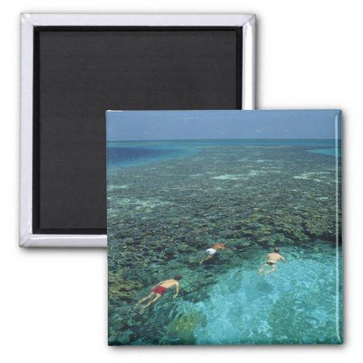 Belice, barrera de arrecifes, filón del faro, azul iman
