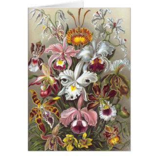 Bella arte de Ernst Haeckel de las orquídeas Tarjeta