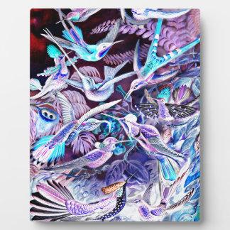 Bella arte del colibrí placa expositora
