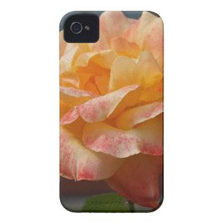 Belleza color de rosa Case-Mate iPhone 4 funda