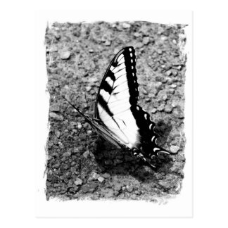 Belleza de la mariposa - foto del primer del postal