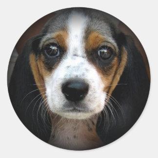 Belleza del beagle pegatina redonda
