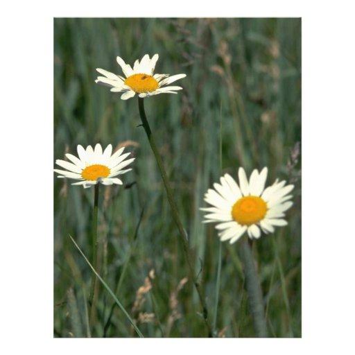 Belleza en las malas hierbas tarjetas informativas