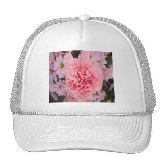 Belleza rosada del clavel del gorra