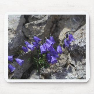 Bellflower de Earleaf (cochleariifolia del Alfombrilla De Ratón