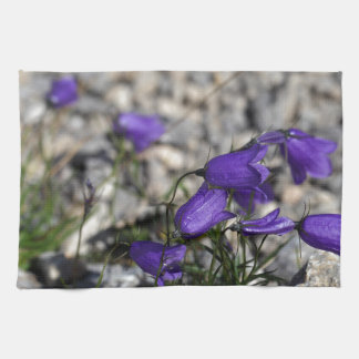 Bellflower de Earleaf (cochleariifolia del Paño De Cocina