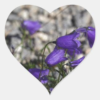 Bellflower de Earleaf (cochleariifolia del Pegatina En Forma De Corazón