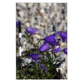 Bellflower de Earleaf (cochleariifolia del Pizarra Blanca