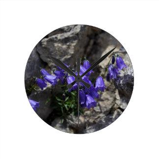 Bellflower de Earleaf (cochleariifolia del Reloj Redondo Mediano