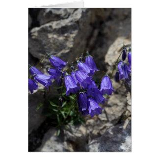 Bellflower de Earleaf (cochleariifolia del Tarjeta