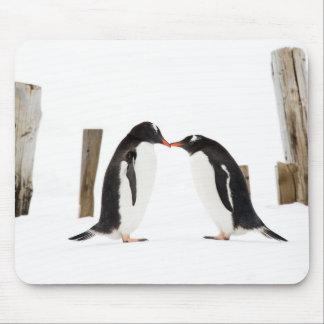 Besando los pingüinos - cojín de ratón alfombrilla de ratón
