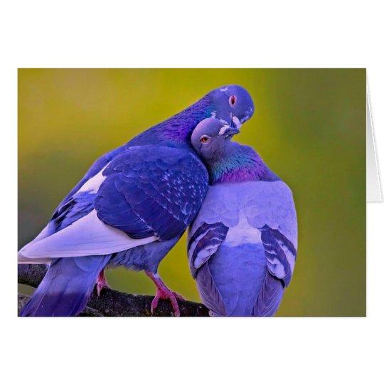 Besar amor de la paloma tarjeta de felicitación