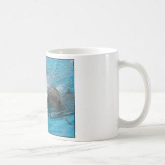 Besar delfínes taza