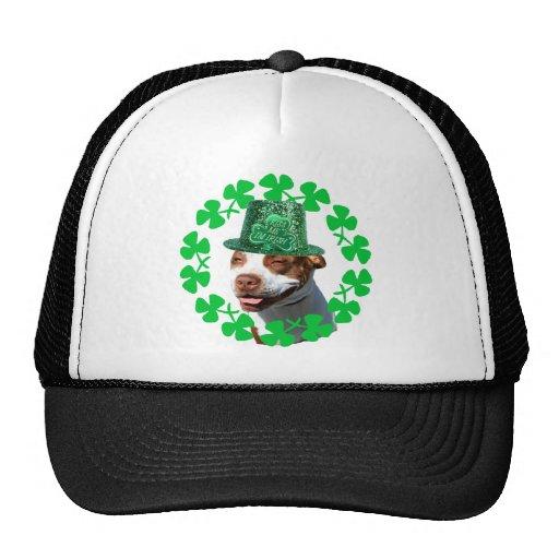 Béseme que soy gorra de béisbol de Pitbull del irl