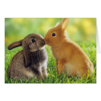 Beso del conejito tarjeta de felicitación