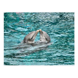 Beso del delfín postal
