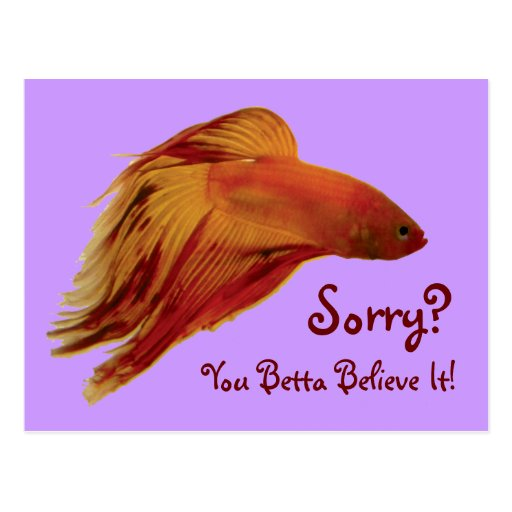 Betta - postal triste