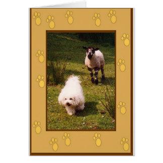 Bichon Frise y tarjeta de felicitación del cordero
