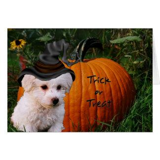 Bichon Halloween Tarjeta De Felicitación