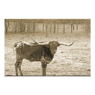 Big Horn Arte Fotografico