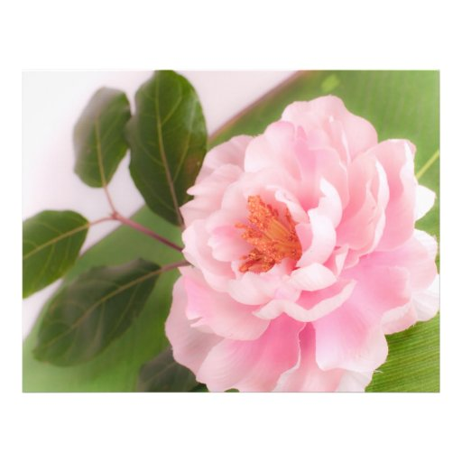 big pink flower tarjetas publicitarias