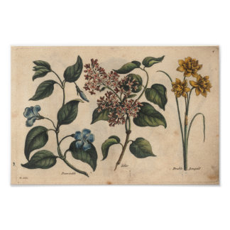Bígaro botánico de la impresión del arte de la