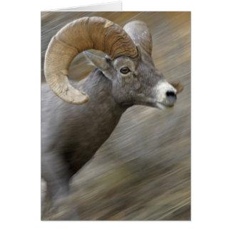 Bighorn corriente del desierto tarjeta de felicitación
