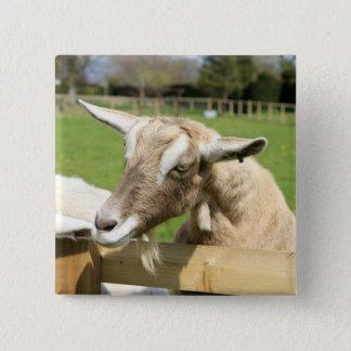Billy la insignia del botón de la cabra