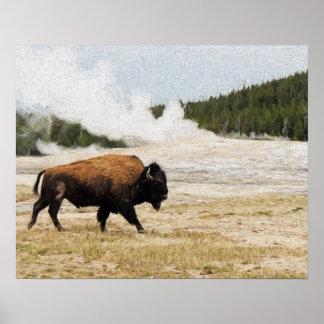 Bisonte con fiel viejo en Yellowstone Póster