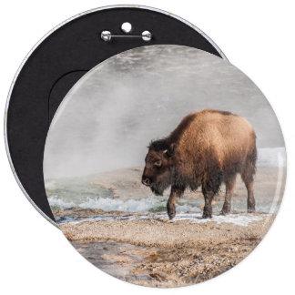 Bisonte o búfalo joven hermoso chapa redonda de 15 cm