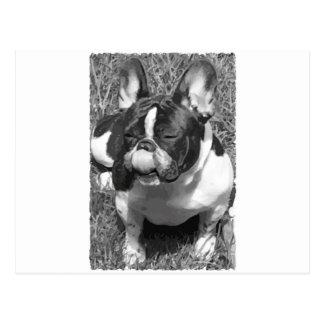 Black & White Frech Bulldog Postal