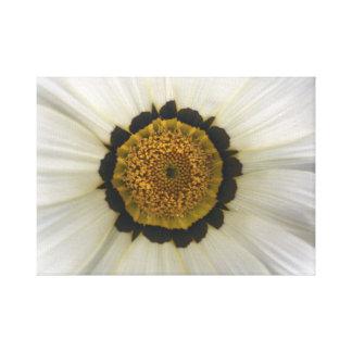 Blanco de Daisybush Lienzo