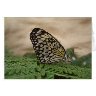 Blanco del negro con la mariposa amarilla de la to