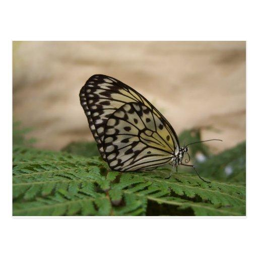 Blanco del negro con la mariposa amarilla de la to tarjetas postales