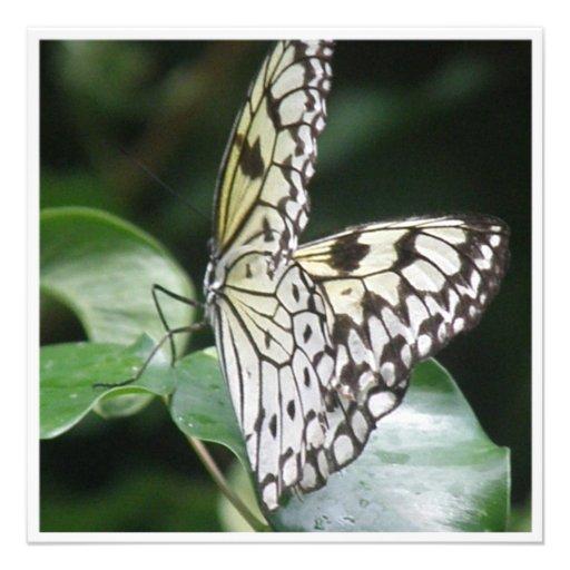 Blanco e invitación coa alas negro de la mariposa
