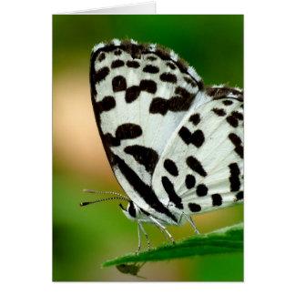 Blanco y mariposa manchada negro de Pierrot Tarjeta Pequeña