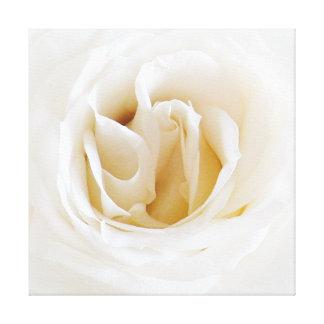 Blanquea rosa - Snowy Lienzo Envuelto Para Galerias