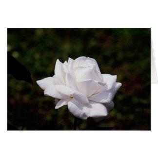 blanquea rosa felicitación