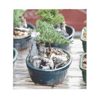 Bloc De Notas Árbol de los bonsais