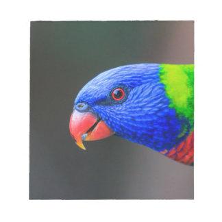 Bloc De Notas Fresco-Arco iris-Lorikeet-silkenphotography