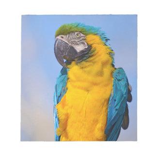 Bloc De Notas Macaw de Gelbbrustara en perca