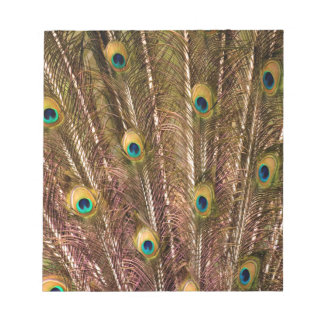 Bloc De Notas Modelo de la pluma del pavo real