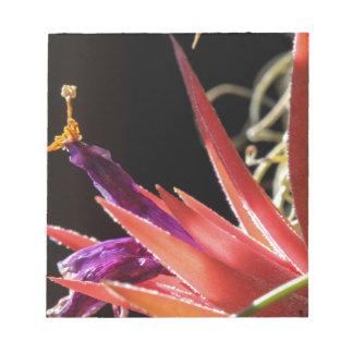 Bloc De Notas Planta claveteada colorida