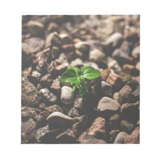 Bloc De Notas Planta frondosa verde que comienza a crecer en los
