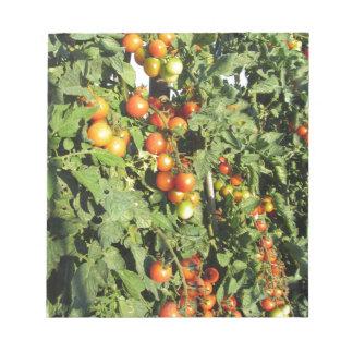 Bloc De Notas Plantas de tomate que crecen en el jardín