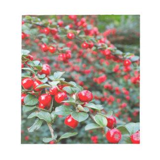 Bloc De Notas Ramas con las bayas rojas maduras del cotoneaster