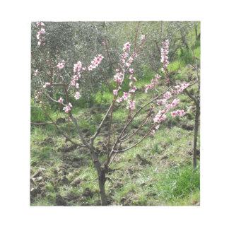 Bloc De Notas Solo árbol de melocotón en flor. Toscana, Italia